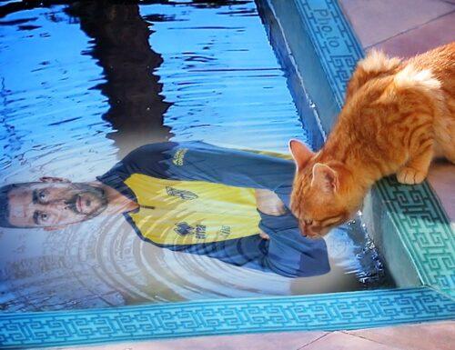 GRAZIANO CAT NEAR THE POOL